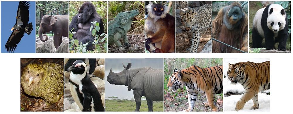 Animais em risco de extinção - Portal É conosco