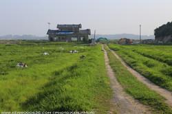 Fukushima0726_0171.jpg