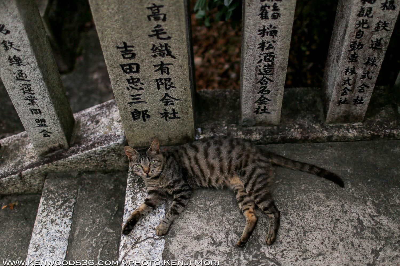 Inuyama0716_0263.jpg