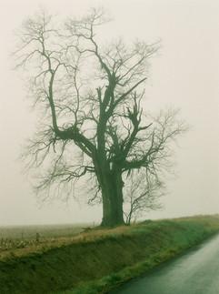 broken_tree.jpg
