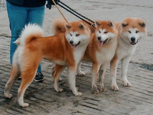 breedstandard1a.jpg