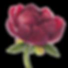 thumb_img_56f6e836764ff_resize_900_5000.