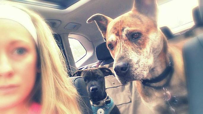 Car ride with Tyger & Niko