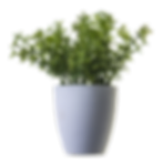 plants-png-44904.png