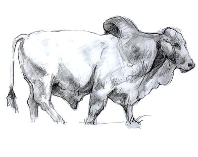 anatomia_animal.png