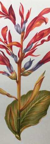 Canna indica - COPIC.jpg