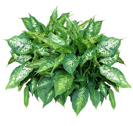 plants-png-44903.png