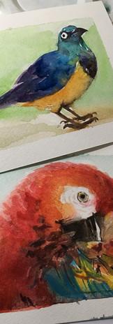 Birds - Aquarela (papel fabriano).jpg