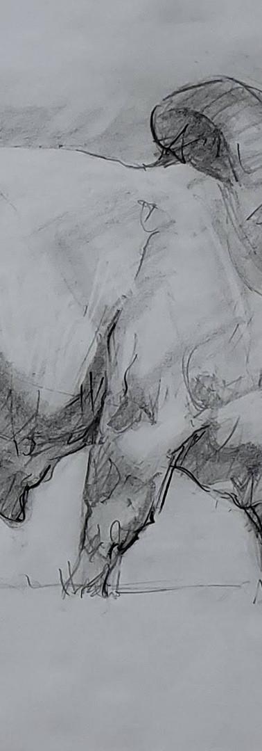 _Boi - Grafite 8B (papel sulfite).jpg