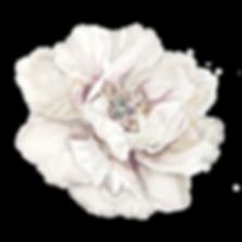 elementos_site-21.png