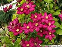 fleur de Bach, santé, beauté, équilibre