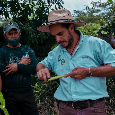 Impulsando el desarrollo de los Bosques Comestibles   y mejoramiento del entorno del café en México