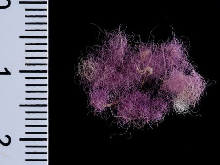 La 'púrpura real' bíblica encontrada en Timna ofrece una mirada al guardarropa Del Rey David