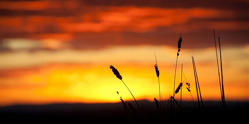 Sunset Yoga by Benevolent Barn