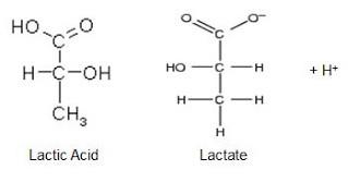 The Lactic Acid Myth
