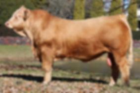 Copy of bull_109A5454.jpg