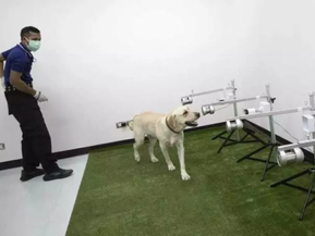 Anjing hidu virus Covid-19 guna peluh