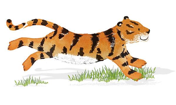 tiger-running.jpg