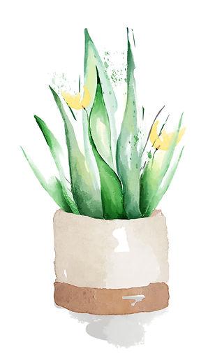 spiky-plant.jpg
