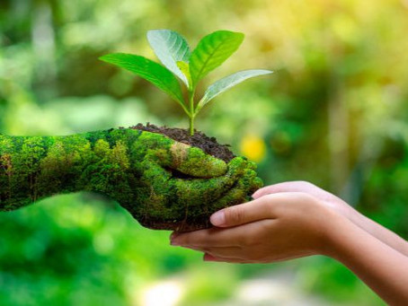 UFSCar oferece MBA em Restauração, Licenciamento e Adequação Ambiental
