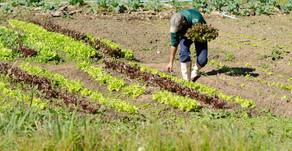 UFRGS | Os impactos do novo coronavírus na agricultura familiar