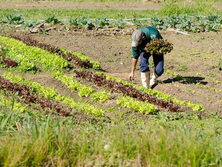 Pesquisa para identificar perfil de agricultores e dificuldades enfrentadas nas atividades agrícolas