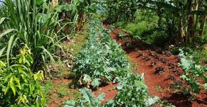 UnB | Projeto nacional mapeia alternativas de distribuição de agroalimentos durante a pandemia