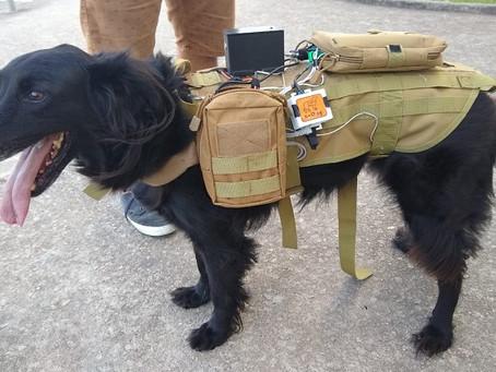 ICT/Unifesp desenvolve protótipo utilizado em operações de resgate com cães