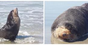 UFPR | Águas produtivas do litoral paranaense atraem animais marinhos em período de migração
