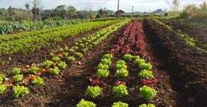 UERGS   Núcleo de Estudos em Agroecologia promove curso sobre manejo de sementes crioulas