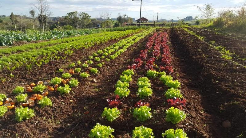 Manejo de sementes crioulas é tema do curso promovido pelo NEA. Foto: divulgação