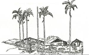 Fazenda Pau D'Alho, em São José do Barreiro, conhecida por ter hospedado o Imperador D. Pedro II | Ilustração: Tom Maia