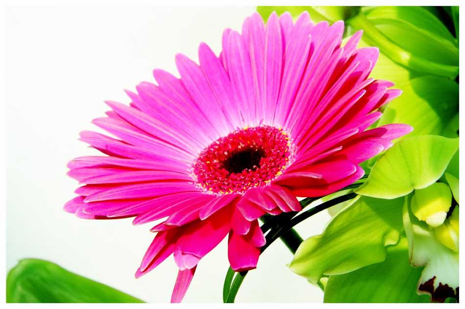 Flowers Photos by Simeon Thaw copyright 20 15 (8).jpg