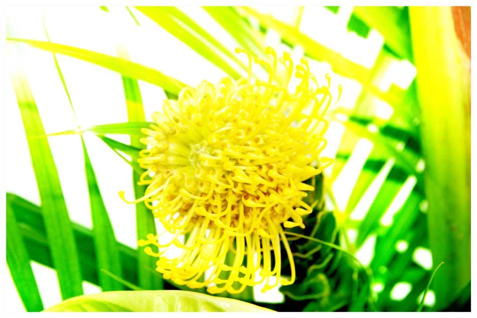 Flowers Photos by Simeon Thaw copyright 20 15 (16).jpg