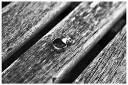 THE RINGS Photo Simeon Thaw Copyright  2015 (18).jpg