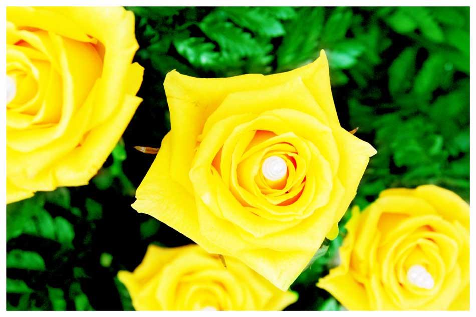 Flowers Photos by Simeon Thaw copyright 20 15 (13).jpg
