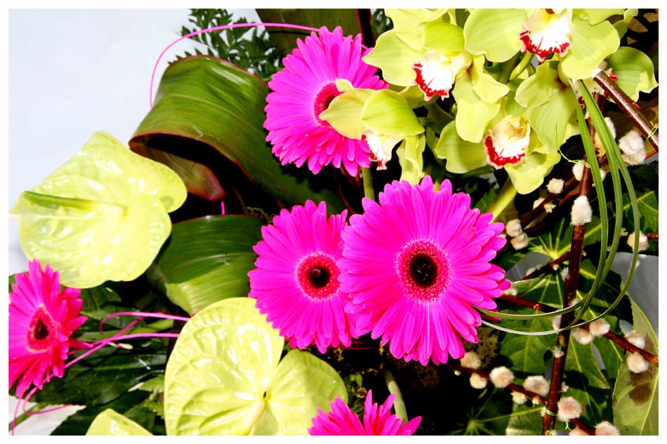Flowers Photos by Simeon Thaw copyright 20 15 (9).jpg