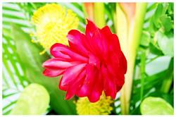 Flowers Photos by Simeon Thaw copyright 20 15 (14).jpg