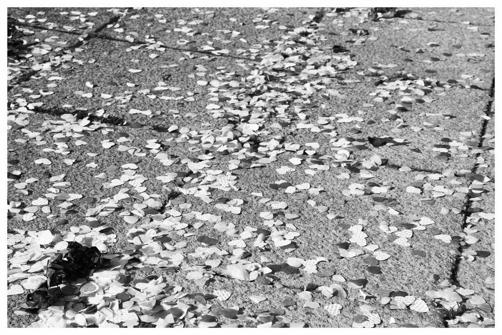 FLOWERS photos by Simeon Thaw copyright 2014 (35).jpg