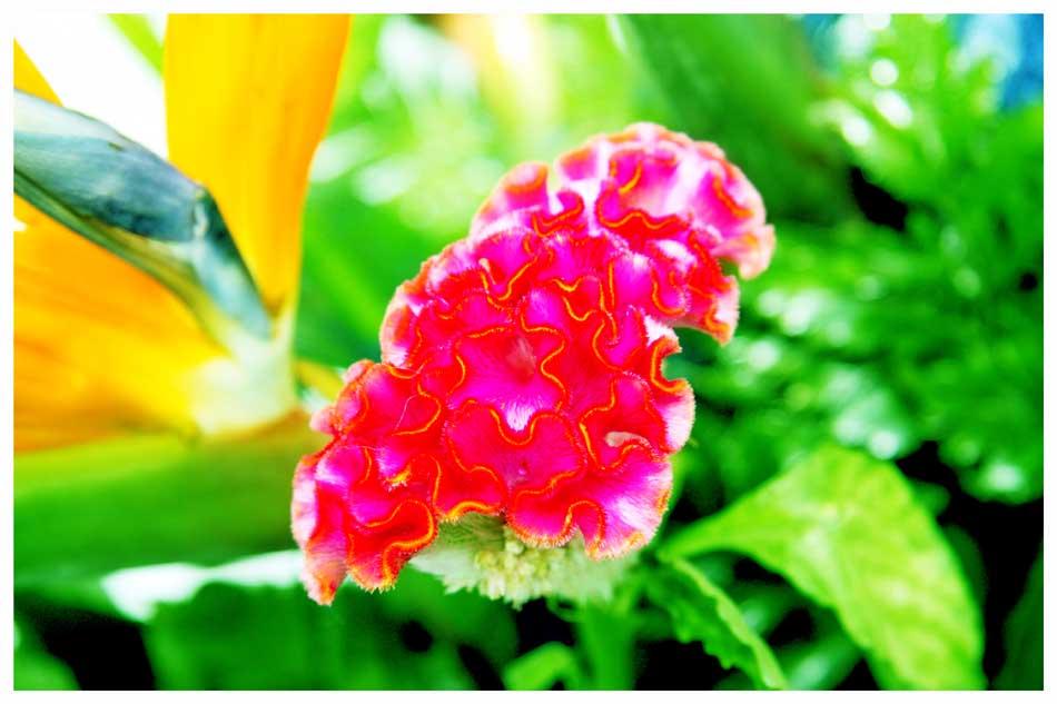 Flowers Photos by Simeon Thaw copyright 20 15 (11).jpg