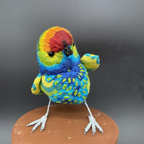 Tiny rainbow bird