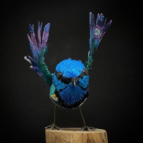 Fairy Wren with Open Wings