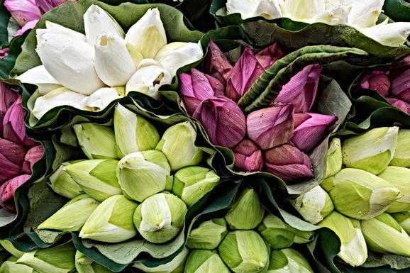 23 en 24 maart: Hasselt wordt bloemenstad tijdens koopweekend