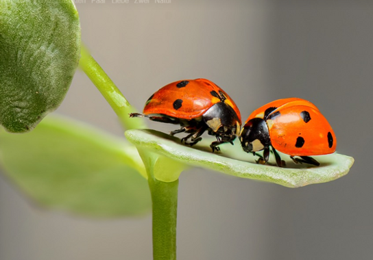 2 käfer.png