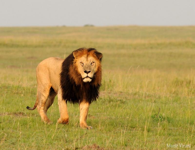 Mara Ngenche Safari Camp - Masai Mara (24)