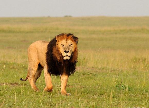 2 Nights / 3 Days Masai Mara Safari