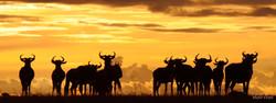3 Mara Ngenche Safari Camp - Masai Mara (64)
