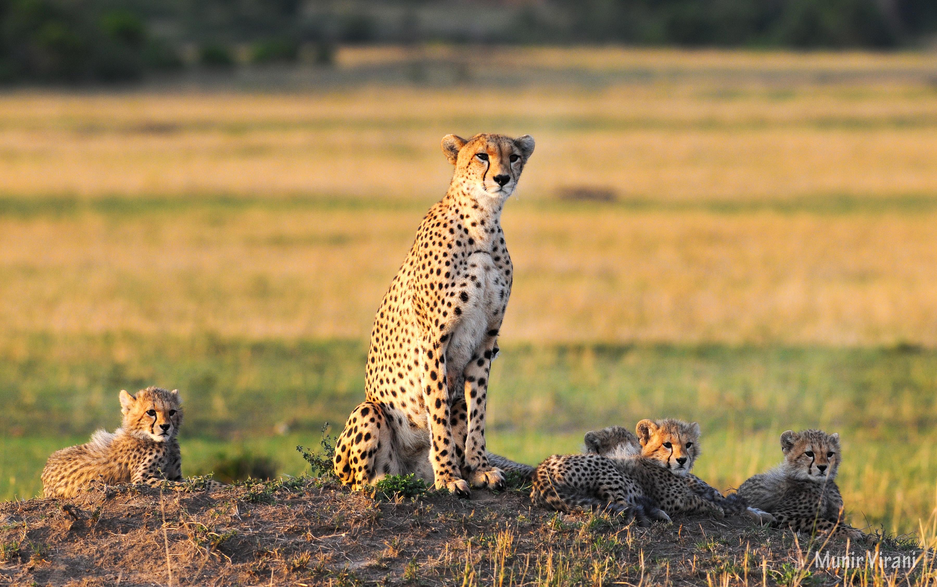 Tipilikwani Mara Camp - Masai Mara (37)