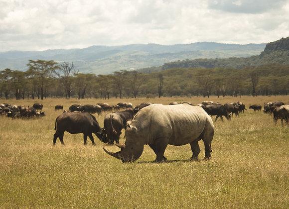 2 Nights / 3 Days Lake Nakuru Safari