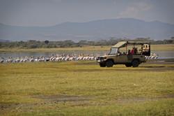 Mbweha Camp - Lake Nakuru (47)